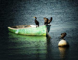 blue-boat-green
