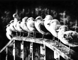 ghost-gulls